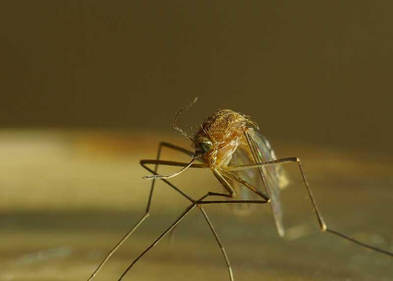 Quel anti moustiques pour la maison conseils - Quel extincteur pour la maison ...