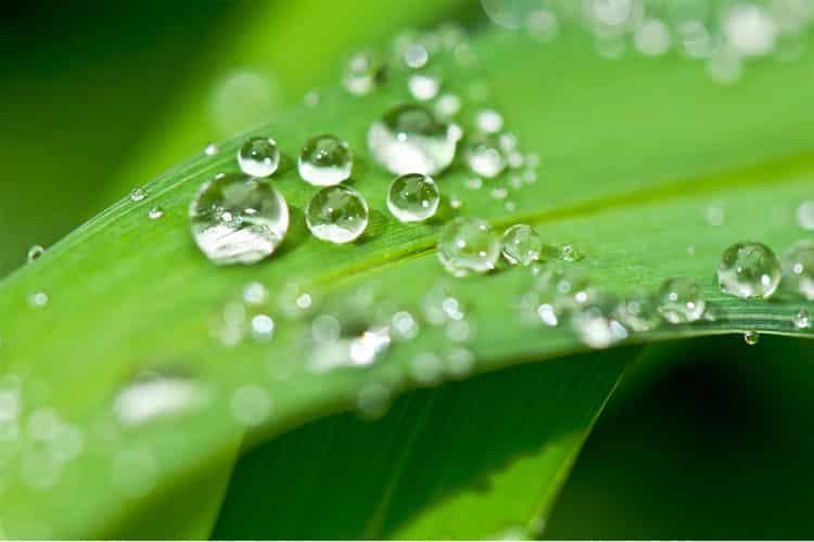 récupérateur eau pluie coût amortissement cuve