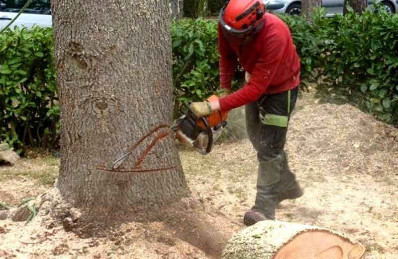 Abattage gratuit d'un arbre