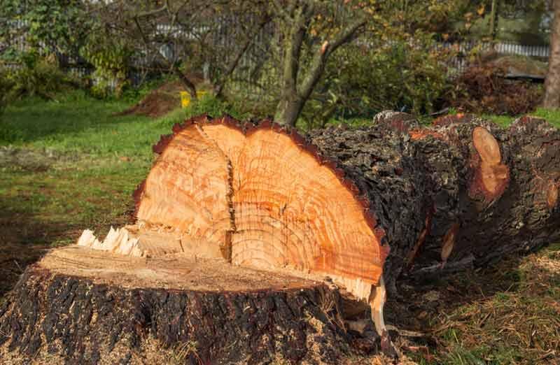 Prix d'abattage d'un arbre