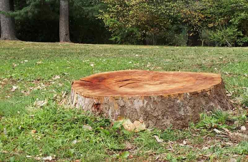 Prix de dessouchage d'un arbre
