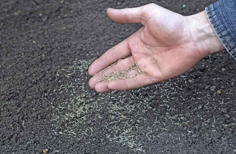 Prix d'un gazon à semer