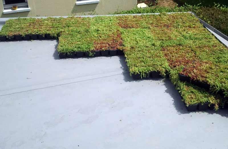 L'étanchéité d'un toit-terrasse végétalisé