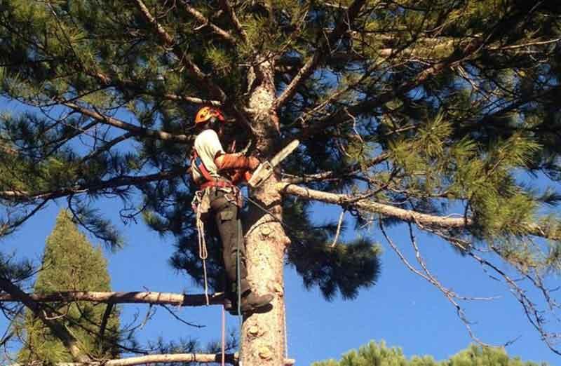 Prix d'élagage d'un arbre de 10 à 15 m