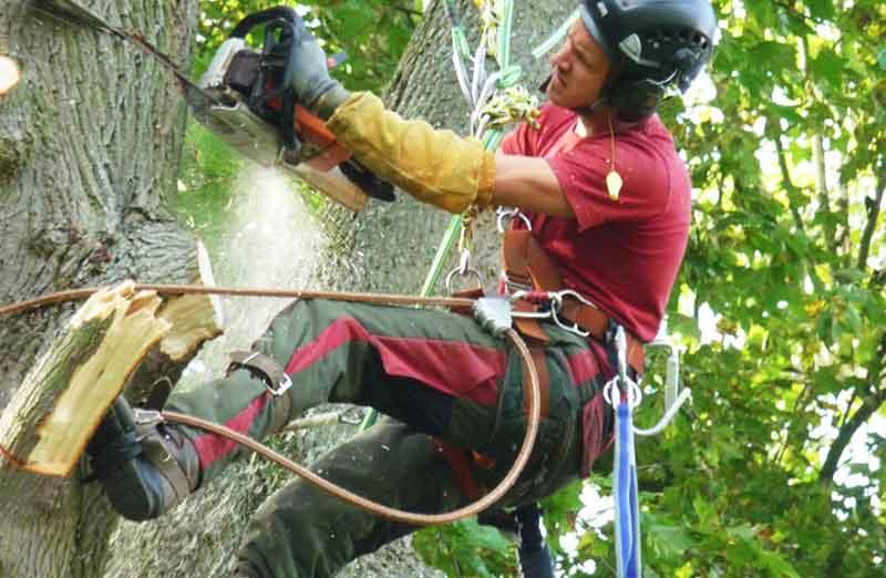 Prix d'élagage d'un arbre supérieur à 20 m