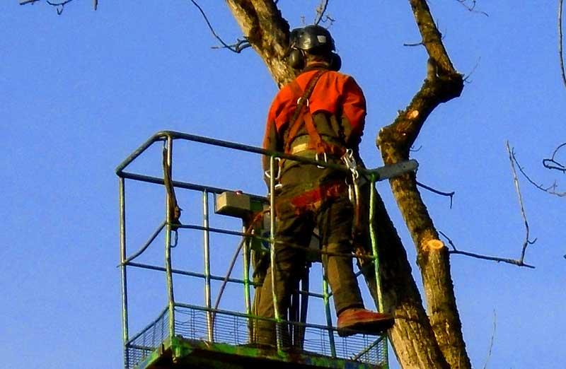 Prix d'élagage d'un arbre