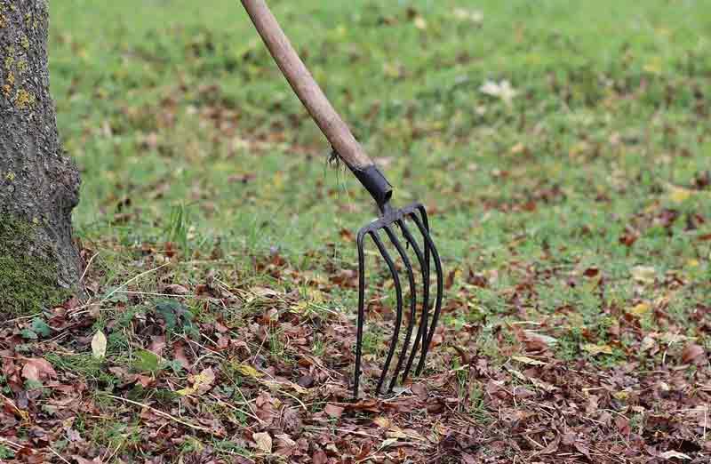 Prix d'un nettoyage de jardin