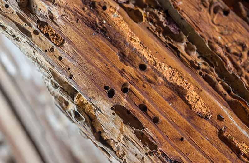 Détecter la présence de termites, comment faire ?