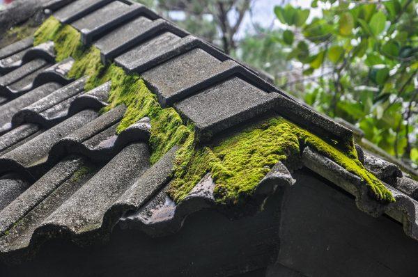 démoussage de la toiture