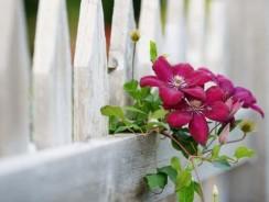 Quels types de clôture pour votre jardin ?