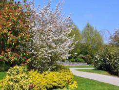Comment déterminer l'aménagement de son jardin ?